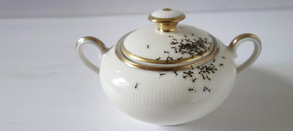 porcelana e formigas